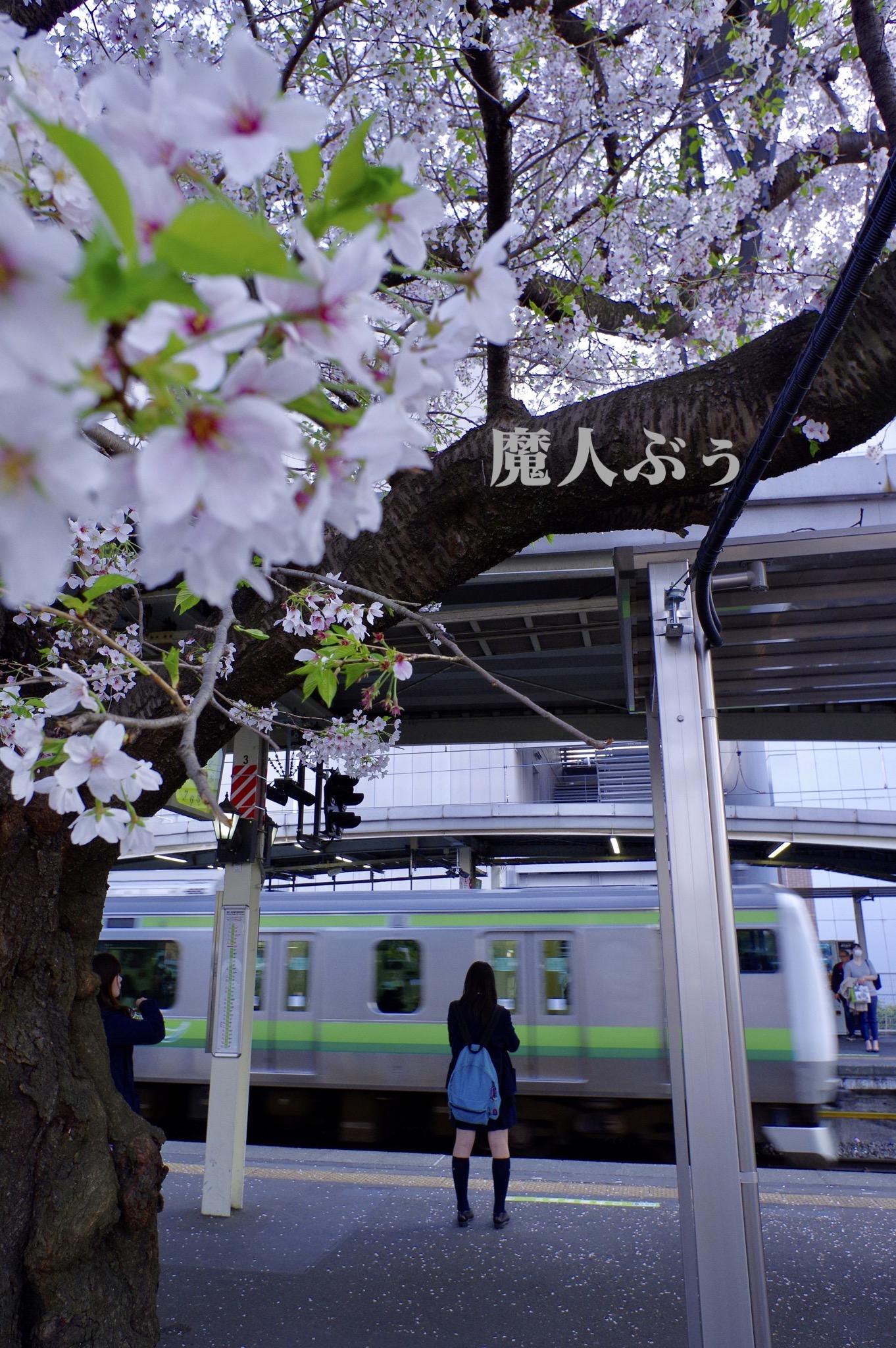 takagi_a2_IMG6656.jpg